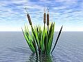 Aquatic Plant 01
