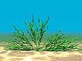 Aquatic Plant 12