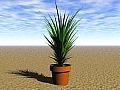 Plant 07