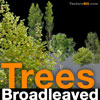 Broadleaved Tree 07