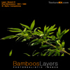 Bamboo Branch 01