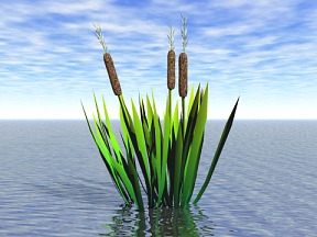 3D 3D Model Download Aquatic Plant 01