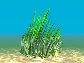 3D 3D Model Download Aquatic Plant 11