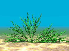 3D 3D Model Download Aquatic Plant 12