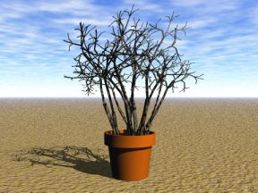 3D 3D Model Download Plant 17