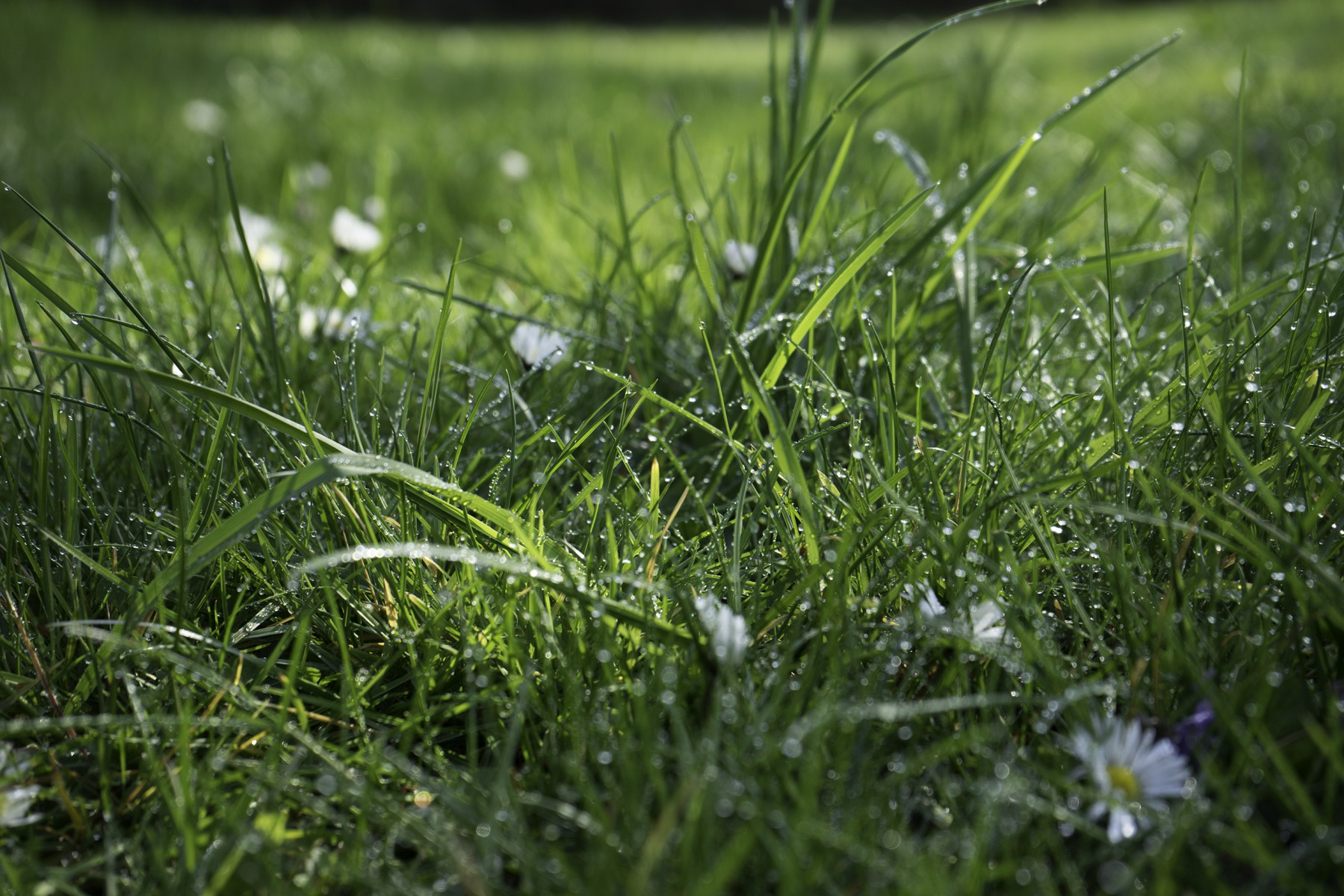 3D Photo Raindrops on grass