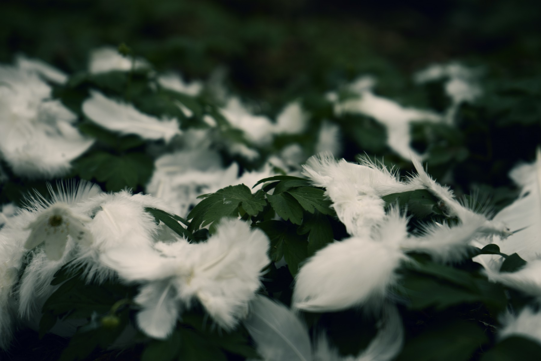 White Feathers On The Forest Ground Free Photo Download By