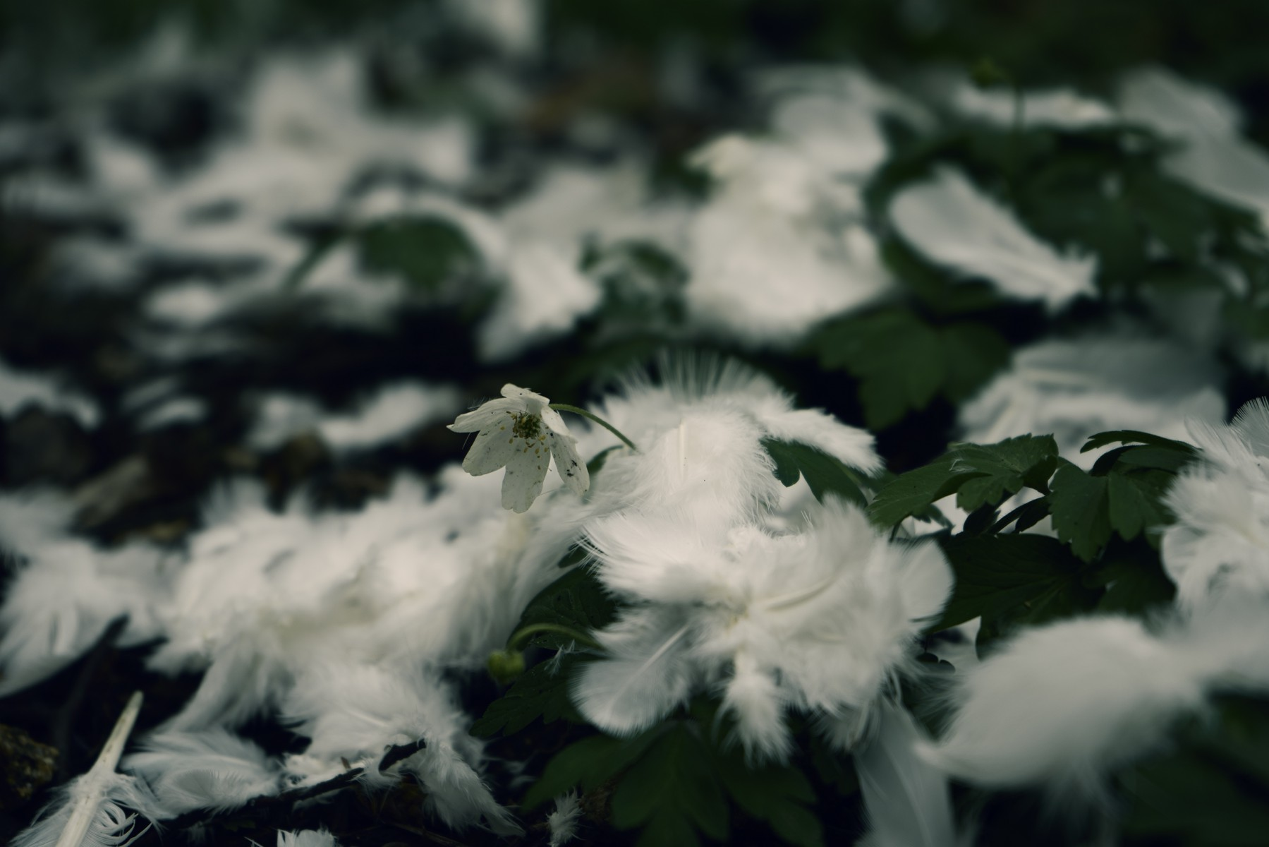 3D Photo White feathers on the forest ground