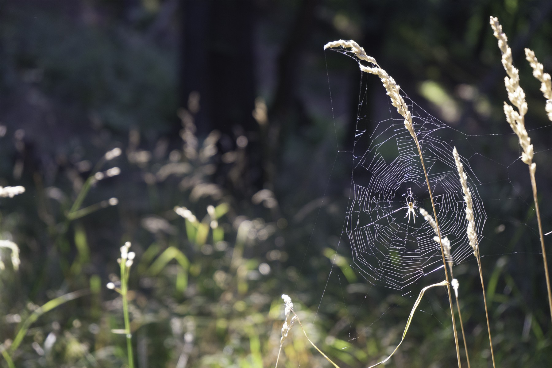 3D Photo Tall grass at forest with a spider