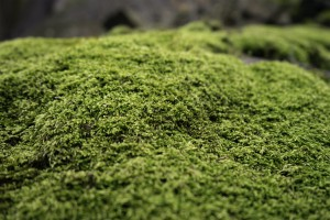 Moss covered rock Photo