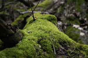 Moss covered tree trunk Photo