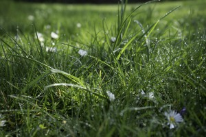 Raindrops on grass Photo