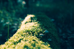 Moss covered tree Photo