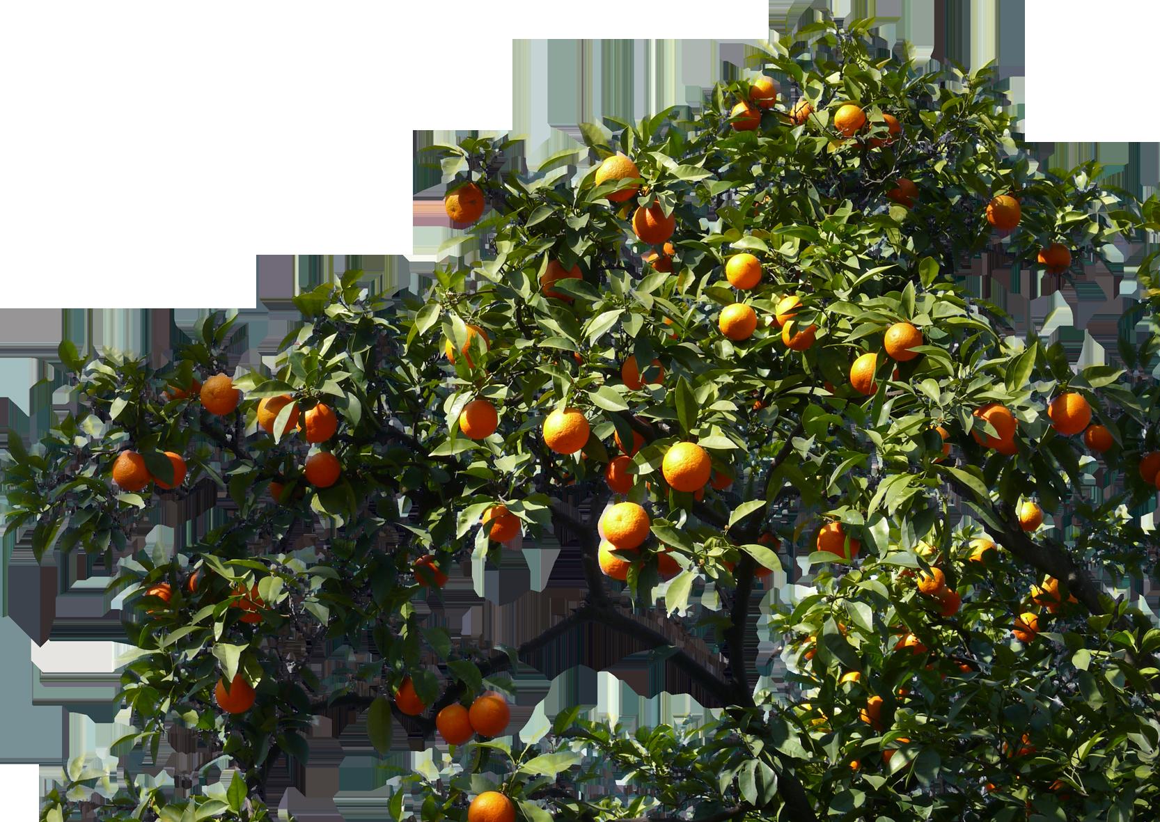 Orange Branch 08 Free Texture Download By 3dxo Com