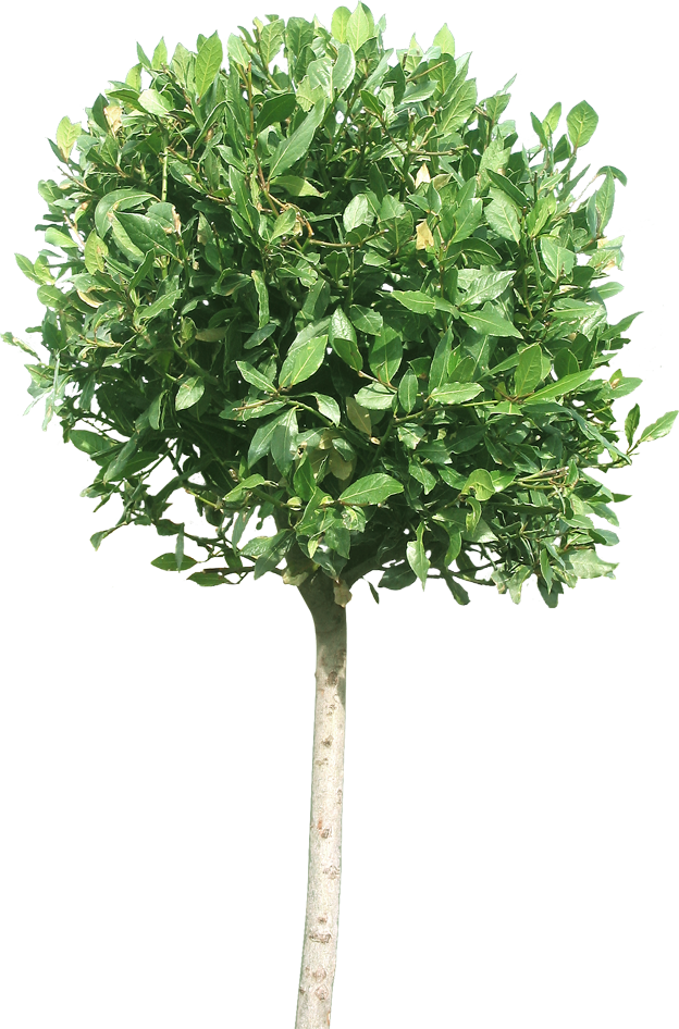 Plant 01 Free Texture Download By 3dxo Com